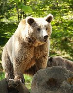 Bear Awareness Online Course