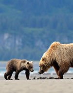 Bear Awareness Online Training from safetyclasses.ca