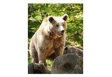Bear Awareness Online Course