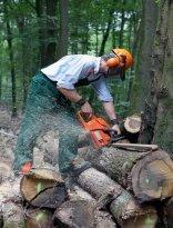 Chainsaw Safety Training Online