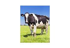 Dairy Worker Safety Orientation Series Online Course